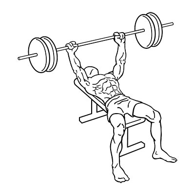 What muscle does bench press work?